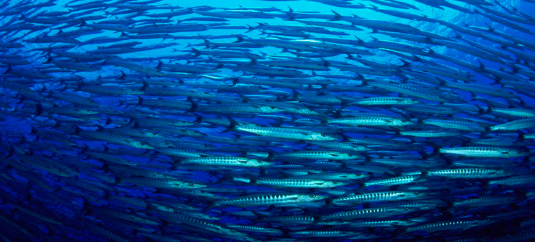 sustentabilidade-oceanos-evento-internacional-unesco