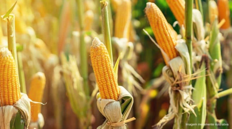 proteína do milho