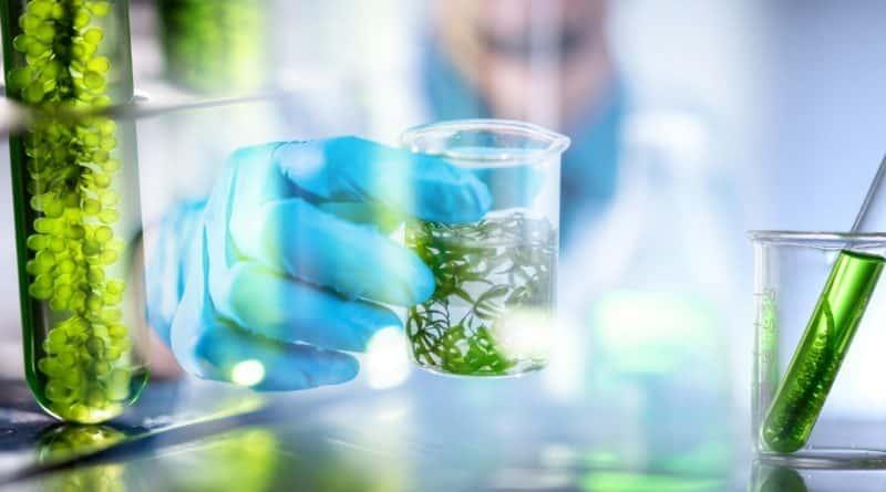 tratamento com algas
