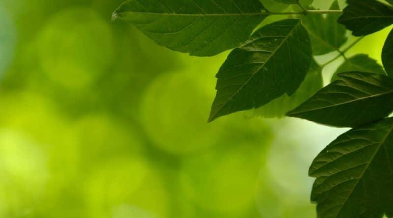 ana-meio-ambiente